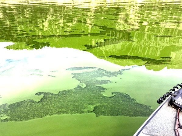 Harmful-Algal-Blooms-02