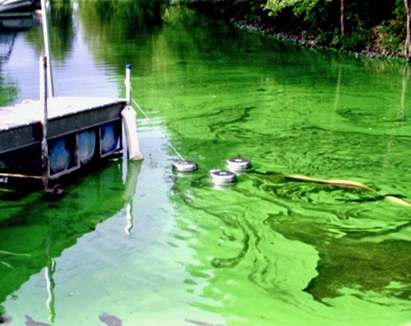 Harmful-Algal-Blooms-04